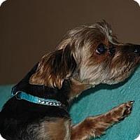 Adopt A Pet :: Oliver - Ogden, UT