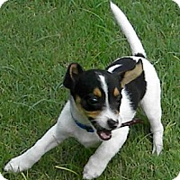 Adopt A Pet :: SUZYQ - Phoenix, AZ