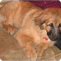 Adopt A Pet :: Leo - Gilbert, AZ