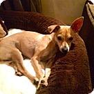 Adopt A Pet :: Petra