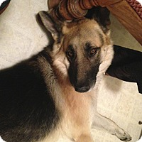Adopt A Pet :: Enzo - San Francisco, CA
