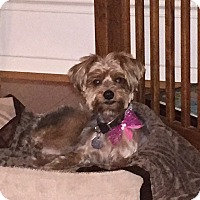 Adopt A Pet :: Princess - Conroe, TX