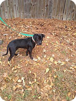 Boxer Mix Dog for adoption in Odenville, Alabama - Jasmine