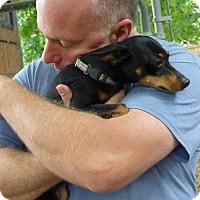 Adopt A Pet :: Minnie - Wyanet, IL