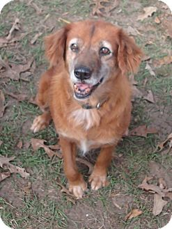 Golden Retriever Mix Dog for adoption in Ravenel, South Carolina - Isabella