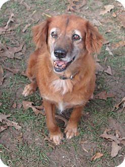 Golden Retriever Mix Dog for adoption in Ravenel, South Carolina - Isabella