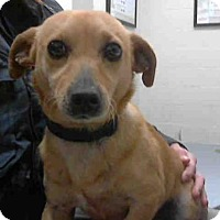 Adopt A Pet :: LAYLA - Conroe, TX
