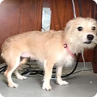 Adopt A Pet :: Kachina - Lewisburg, TN