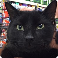 Adopt A Pet :: Lawrence - Levittown, NY