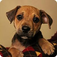 Adopt A Pet :: Dandelion - Sudbury, MA