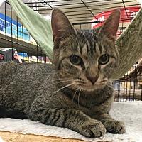 Adopt A Pet :: Carolina - Monroe, GA