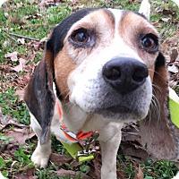 Adopt A Pet :: Odie - Starkville, MS