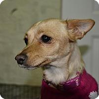Adopt A Pet :: Carnie - Meridian, ID
