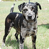 Adopt A Pet :: Diesel - Ridgway, CO