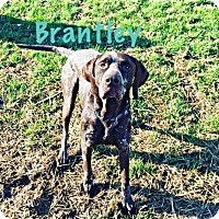 Adopt A Pet :: Brantley - Streetsboro, OH