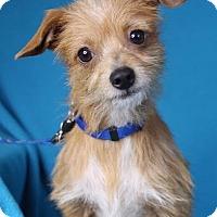 Adopt A Pet :: Rocky - Minneapolis, MN