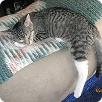 Adopt A Pet :: Tessa - Kohler, WI