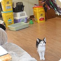 Adopt A Pet :: Suziki - St. Louis, MO