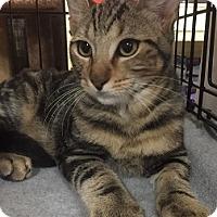 Adopt A Pet :: Boris - Oviedo, FL