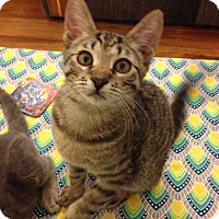 Adopt A Pet :: Phelps - Philadelphia, PA