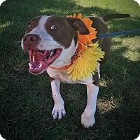 Terrier (Unknown Type, Medium) Mix Dog for adoption in Flint, Michigan - Nina