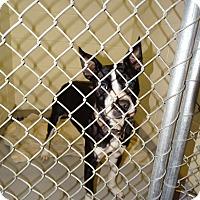 Adopt A Pet :: MILO - Brooksville, FL