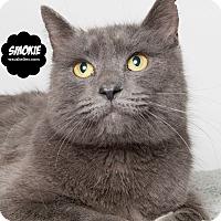 Adopt A Pet :: Smokie - Wyandotte, MI