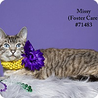 Adopt A Pet :: Missy  (Foster Care) - Baton Rouge, LA