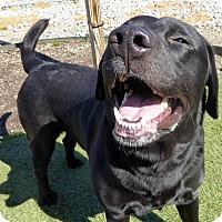 Adopt A Pet :: Buddy #3 - Buckeystown, MD