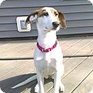Adopt A Pet :: Maggie#2
