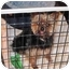 Photo 3 - Yorkie, Yorkshire Terrier Mix Dog for adoption in Conroe, Texas - Wicket