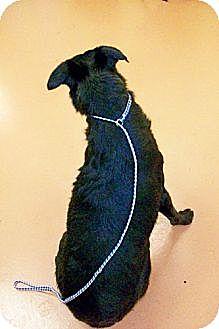 Labrador Retriever/Collie Mix Dog for adoption in Tunica, Mississippi - MO