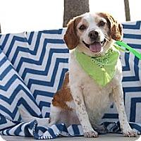 Adopt A Pet :: Calvin - Princeton, KY