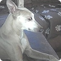 Adopt A Pet :: Buddy - Croton, NY