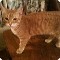Adopt A Pet :: Skittles - Justin, TX