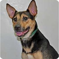 Adopt A Pet :: Sundae - Port Washington, NY