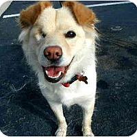 Adopt A Pet :: Gigi - Scottsdale, AZ