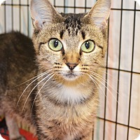 Adopt A Pet :: Sweet Pea - Lincoln, NE