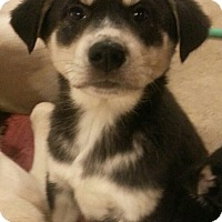 Adopt A Pet :: Axel*ADOPTED!* - Chicago, IL