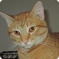 Adopt A Pet :: Thomas - Norwich, NY