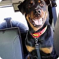 Adopt A Pet :: LT - Rexford, NY