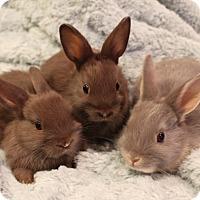 Adopt A Pet :: Star & Babies - Hillside, NJ