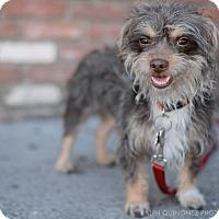 Adopt A Pet :: Robert - Encino, CA
