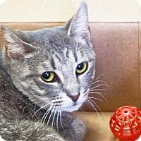 Adopt A Pet :: Greg - Lincolnton, NC