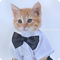 Adopt A Pet :: Arthur - Millersville, MD