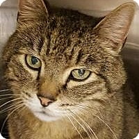 Adopt A Pet :: Malaki - Worcester, MA