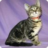 Adopt A Pet :: Kalypso - Powell, OH