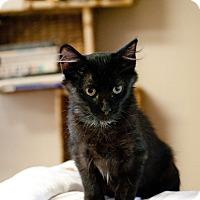 Adopt A Pet :: Alexa - Huntsville, AL