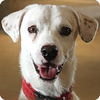 Adopt A Pet :: Grimley - Dallas, TX