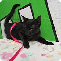 Adopt A Pet :: 16C-1443 (11/14) - Rome, GA